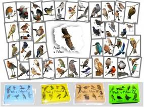 Ptaki w Polsce I, II, III i IV